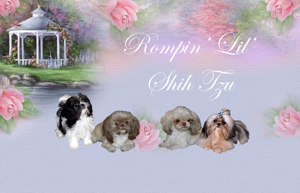 Specializing in AKC & CIDRA Chinese Imperial Shih Tzu puppies ranging from imperial 3-6 lbs puppies up to tiny 6-9 lbs. We have champion blood lines in some of our little ones